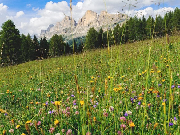 Hiking Hotels best alpine